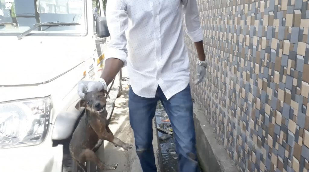UDPFA / tt-creative.com - Rescuers pluck the puppy to safety, before washing him and reuniting him with his mother.