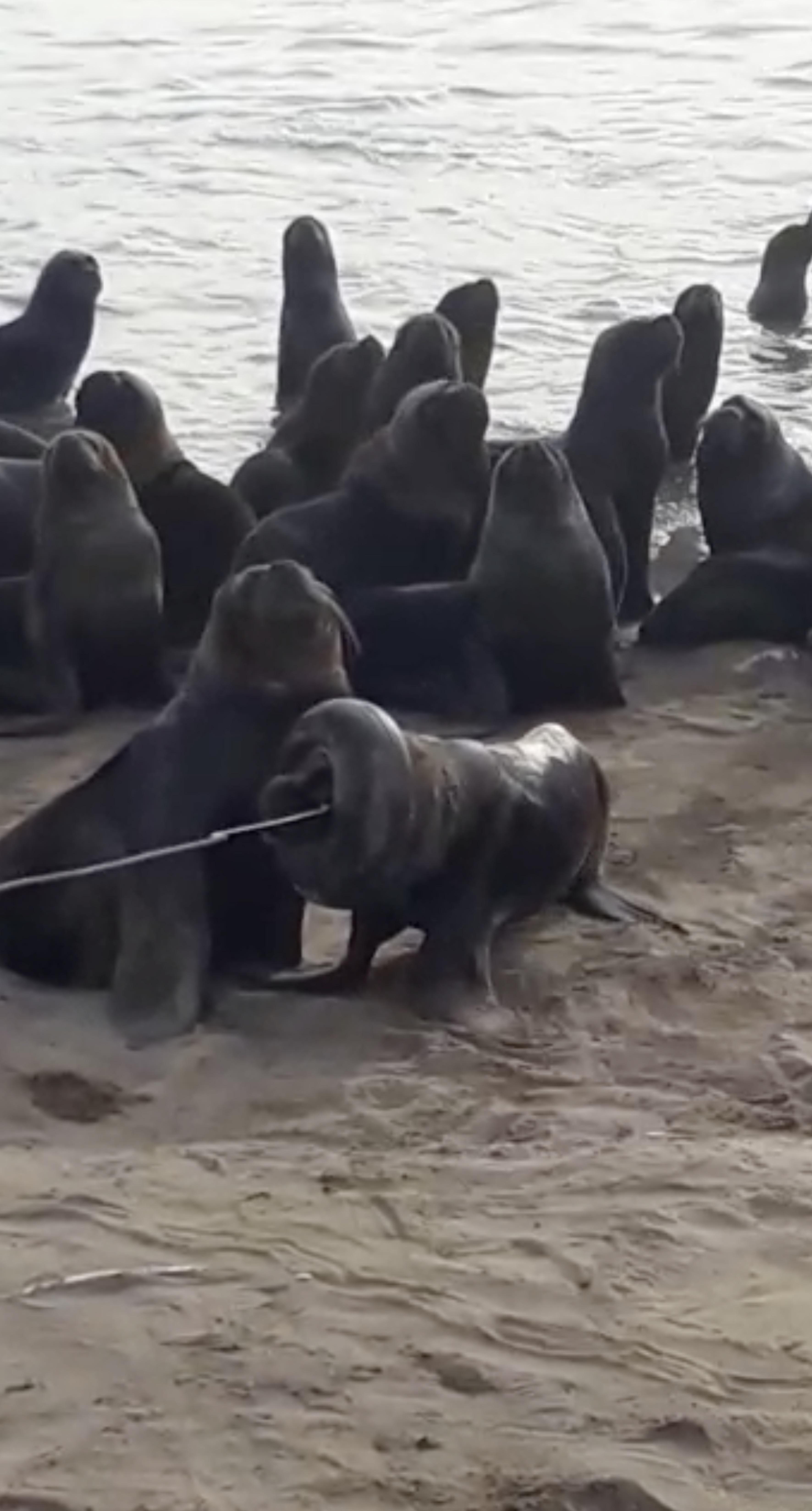 sea lion tire